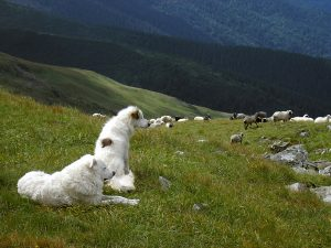 The Idyll Of The Mountain Pasture