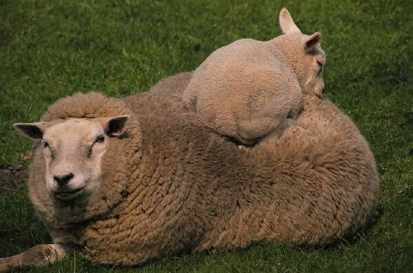 Benefits of Wool Bedding