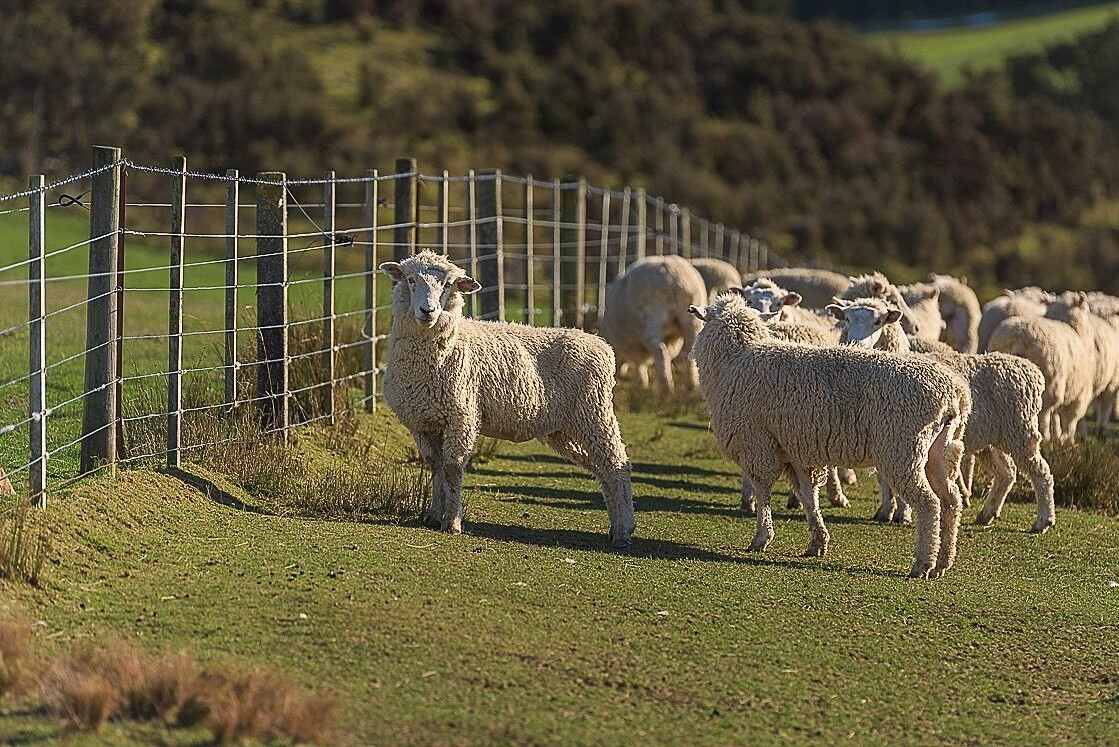 "Common Misconceptions About Wool, Myth #3: ""Wool is Environmentally Hazardous"""