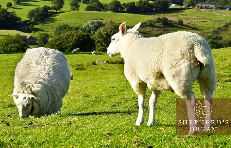 Climate Beneficial Wool (Part 5): Other Sustainable Practices