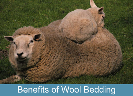 Benefits Of Wool Bedding Button